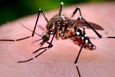 Πως να διώξω τα κουνούπια – 10 φυσικοί τρόποι