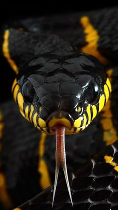 Best Snake Photos You Never Seen Before - Animals Comparison Wild Animal Wallpaper, Snake Wallpaper, Lion Wallpaper, Wallpaper Downloads, Nature Wallpaper, Les Reptiles, Cute Reptiles, Reptiles And Amphibians, Beautiful Creatures