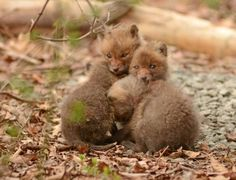 Father and Daughter Find Baby Foxes in Backyard