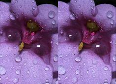 3D digital macro photography with SLR camera