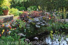 Tuinen Nederland  Vijver, oeverbeplanting   Petasites, Rodgersia  Groot hoefblad, Schout-bij-nacht  De Heerenhof  overig