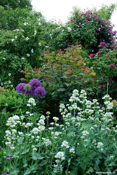 Partner, Plants, Gardens, Cottage Gardens, Low Maintenance Garden, Yard Maintenance, Garden Plants, Country Landscaping, Outdoor Gardens