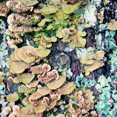 Nature photography print of lichen growing on a tree by Allison Trentelman.