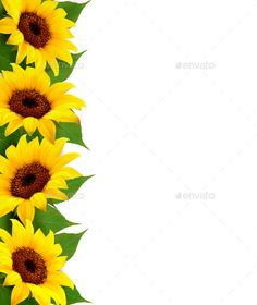 Buy Sunflowers Background With Sunflower And Leaves by almoond on GraphicRiver. Sunflowers Background With Sunflower And Leaves. Fully editable, vector objects separated and grouped, gradie. Photo Frame Wallpaper, Framed Wallpaper, Sunflowers Background, Sunflowers And Daisies, Flower Frame, Flower Art, Vector Flowers, Leaves Vector, Sunflower Room