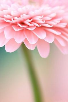 Complementary Color Of Pink pink blossom |--iza-- | shades of pink | pinterest | blossoms