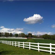 Miniature horse farm in West Brookfield, MA.