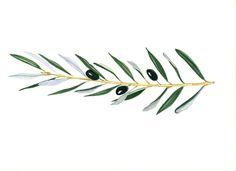 delicate olive branches design - Pesquisa Google