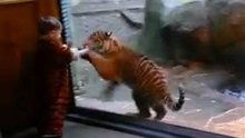 Watch NBC TODAY Show: Baby Tiger Costume Fools Real Tiger Cub online | Hulu Plus