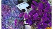 Menlo Park Farmer's Market thewellnessscientist.com.jpg