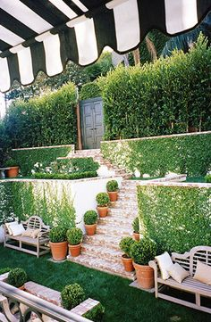boxwood in containers + vine covered tiered walls + black & white awning