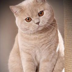 fat cute cat