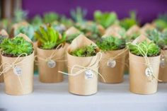 Mesmo que não precisem de muitos cuidados, devemos sempre prestar atenção nas necessidades básicas de plantas como cactos e suculentas. Por isso reunimos 8 dicas de ouro para você cuidar do seu mini-jardim, confira: