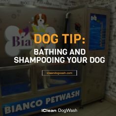 """""""DOG TIP: BATHING AND SHAMPOOING YOUR DOG""""- Do not bathe your dog too often because that will dry out the skin, deplete healthy oils from the coat and skin, and lead to scratching and irritation. Frequency is largely dependent on the breed and activities of the dog. Dogs who spend a lot of time outside or engage in outdoor activities that expose them to dirt, bugs and/or debris typically require more bathing, perhaps every 6 weeks or more frequently. http://icleandogwash.com/"""