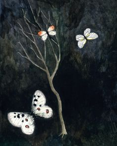 Night Butterflies Rebecca Rebouche