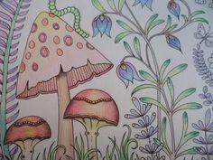 Colorindo Cogumelo - Floresta encantada