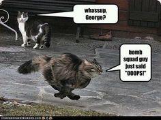 #cats #kittens #funny #animals