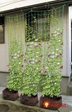 cheap brand -retail garden trellis netting/plants climbing n. -Wholesale cheap brand -retail garden trellis netting/plants climbing n. Garden Types, Diy Garden, Garden Trellis, Garden Projects, Garden Plants, Garden Vine Ideas, Outdoor Projects, Herb Garden, Cheap Garden Ideas