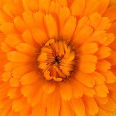 King Creative  - Perfect Orange