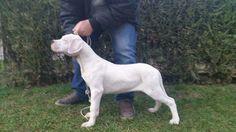 Zaino - 3 months