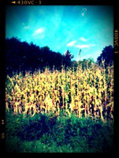 Graan veld op vakantie gemaakt.