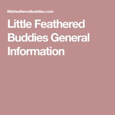 Little Feathered Buddies General Information