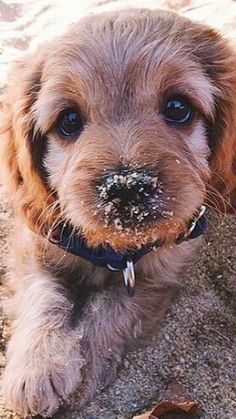 Pictures Of Puppies Wallpaper For IPhone