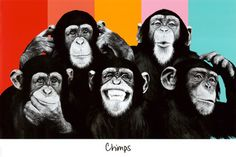 The Chimp Compilation Pop Art Print Poster Pôsters na AllPosters.com.br