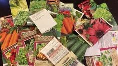 Selecting Seeds for a Successful Garden