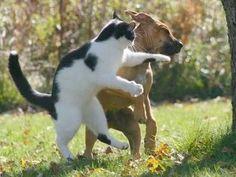 かっこいいネコの画像をたくさんください( ><)! - ゴールデンタイムズ
