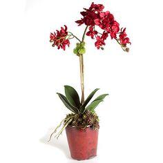 ivyguild | Orchid
