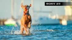 Sony A9 Camera Review Learning Support, Camera Reviews, Sony, Animals, Animales, Animaux, Animal, Animais