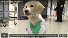 A Day in the Life of Dogtor Oz