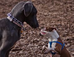 Silver Lake Dog Run - 2/26/11 - http://prints.blackpawphoto.com/galleries - #dogs #nyc #photography