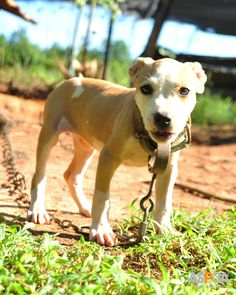 The remaining defendants in the second-largest federal dog fighting bust received their sentences, and justice has been served! Read the details now: http://www.aspca.org/blog/remaining-defendants-receive-sentences-historic-dog-fighting-case
