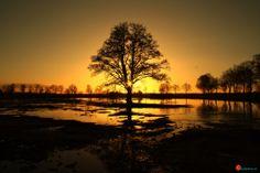 Zonsondergang bij de boom.