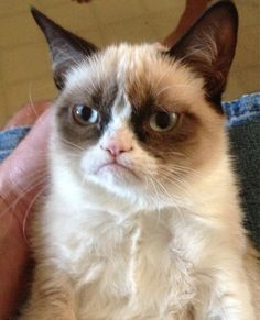 Grumpy cat is Grumpy  고 양 이  of the day. I love when I can use the 한글 keyboard.