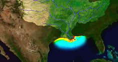 """NOAA released its annual forecast for the size of the Gulf of Mexico """"dead zone""""—an area of coastal water where low oxygen is lethal to marine life. They"""