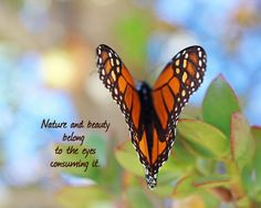 Nature quote. Nature and beauty belong to the eyes consuming it.