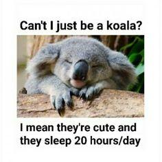 I desperately want to be a koala.