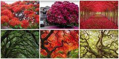 ¡Los recordamos! Los 15 árboles más bellos del mundo. ¡Te emocionará!