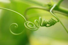 Spiral by Toru Shishikura