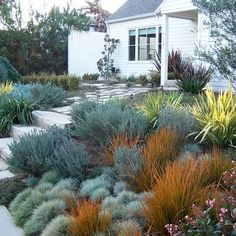 English Garden, California Style - Front yard - traditional - landscape - los an. - in the garden - English Garden, California Style – Front yard – traditional – landscape – los angeles – b - Modern Landscape Design, Traditional Landscape, Landscape Plans, Modern Landscaping, Backyard Landscaping, California Front Yard Landscaping Ideas, Traditional Homes, Desert Landscape, Landscaping Software