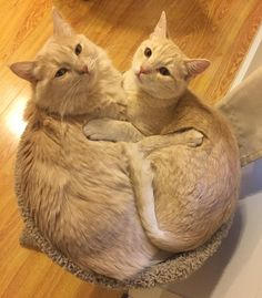 Walked in and found my cats just chillin' out hugging each other