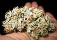 ::dank::ganja::weed smoke::pot head::ganja::cannabis::Mary Jane::herb::NoEllie0123
