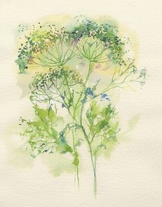 Watercolor by Jake Marshall. Queen Anne's Lace. @Heidi Haugen Haugen Thrapp I want one! Can you paint one for me?! :D