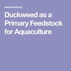 Duckweed as a Primary Feedstock for Aquaculture