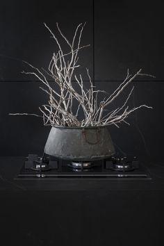Studio, Interior, Plants, Indoor, Studios, Interiors, Plant, Planets