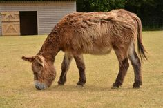 Donkeys aren't horses, and nowhere is that more apparent than in their feed needs. Find out what your donkey should eat.