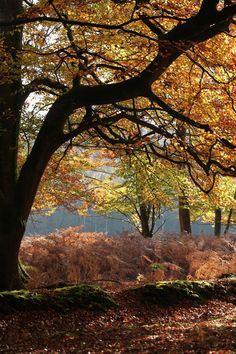 Autumn in the New Forest National Park