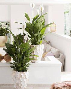 15 Plantas para interiores de apartamentos e casas: confira